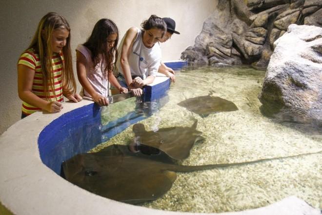 aquario4