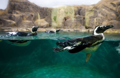 aquario5
